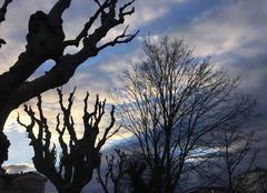 Grands arbres du bord d'Isère au crépuscule