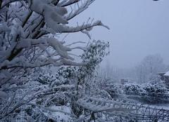 Neige dans le Sidobre