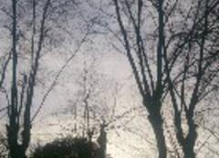 Ciel Bordeaux 33300 Parc fin d'après-midi