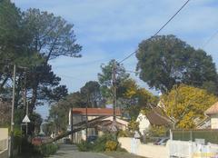 Tempête , chute d'un arbre rue de Commandant l'Herminier