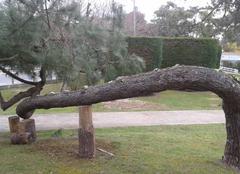 Vent Saint-Georges-de-Didonne 17110 Comment sauver la nature
