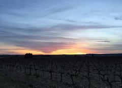 Couché de soleil derrière les vignes de Montfrin sur les hauteurs route de Fournes