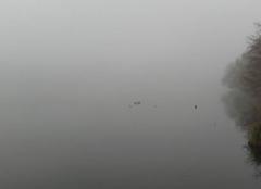 Brouillard sur la région nantaise