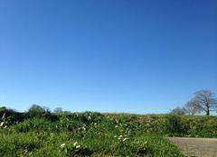 Faune/Flore Susmiou 64190 Le printemps en avance