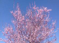 Faune/Flore Paray-sous-Briailles 03500 Le printemps