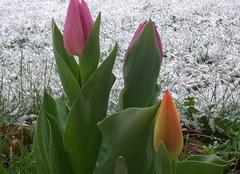 Neige Lagarde-Enval 19150 Retour de l'hiver en Corrèze