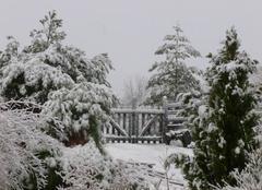 Neige Saint-Germain-Laprade 43700 Après l'orage de neige!