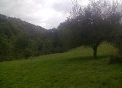 Paysage dans le Tarn