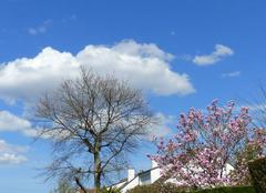 Ciel Pessac 33600 Magnolias for ever