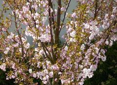Faune/Flore Niort 79000 Le printemps est arrivé