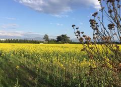 Ciel Romans-sur-Isere 26100 Couleurs printanières