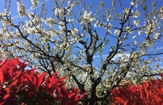 Ciel Mours-Saint-Eusebe 26540 Couleurs de printemps