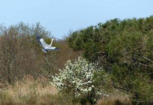 Ciel Audenge 33980 Petit à petit l'oiseau fait son nid !