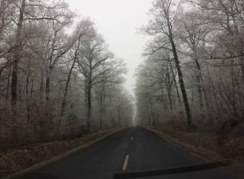 Forêt de Marchenoir