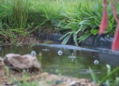 Pluie Bourg-des-Comptes 35890 C'est la pluie qui tombe goutte à goutte