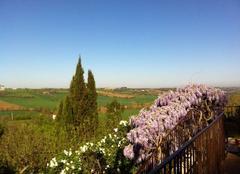 Faune/Flore Cuq-Toulza 81470 La vue de Cuq château