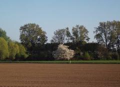 Faune/Flore Hombleux 80400 La nature