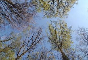 Faune/Flore Boisseuil 87220 Forêt