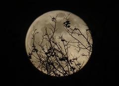 Ciel Nantes 44000 21h48 la lune
