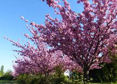 Faune/Flore Le Rheu 35650 Le printemps est là