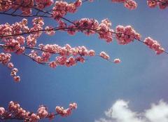 Ciel Angers 49000 Le printemps arrive