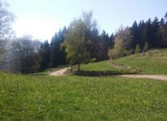 Faune/Flore Vagney 88120 Les Vosges