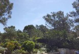 Ciel Saint-Clement-de-Riviere 34980 Soleil de midi