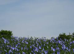 Ciel Vaire 85150 Bleu... Bleu...
