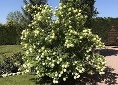 Faune/Flore Espinasse-Vozelle 03110 Le printemps s'est installé !