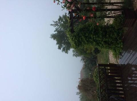 Pluie et brouillard