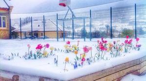 Neige Lus-la-Croix-Haute 26620 La cour d'école sous la neige