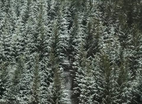 Neige au col de chavade