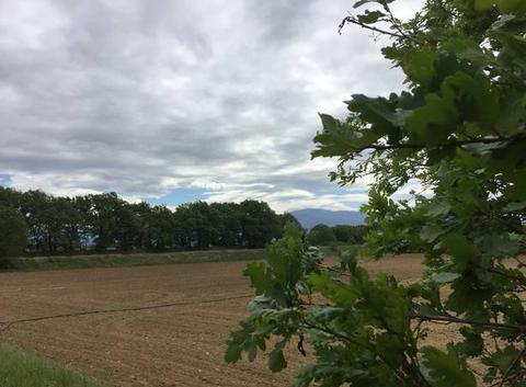Camoagne moursoise sous le vent sous ciel couvert