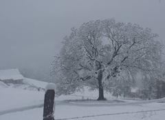 Neige Le Bouchet-Mont-Charvin 74230 Magnifique neige