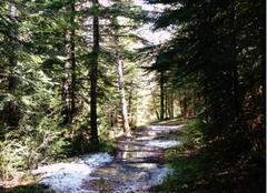 Neige Caille 06750 Dernière neige