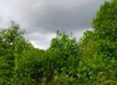 Orage Montigny-les-Cherlieu 70500 Orage en vue