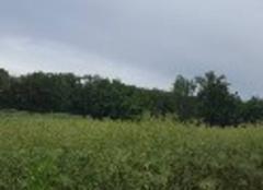 Pluie Lavit 82120 Il pleut