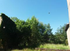 Ciel Sarrewerden 67260 C'est l'été sur l'Alsace.