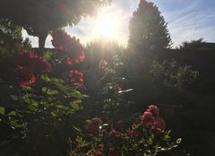 Ciel Mours-Saint-Eusebe 26540 Reines sous soleil couchant