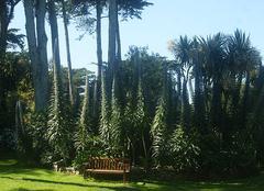 Faune/Flore Ile-de-Batz 29253 Jardin Delaselle
