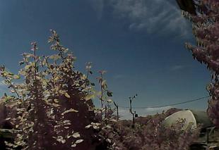 Ciel Genlis 21110 Jardin et station météo ensoleillés en ce mardi de juin.