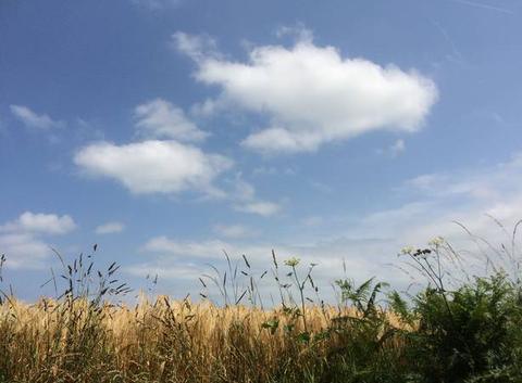 Un écrin de verdure pour de jolis nuages