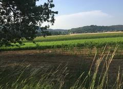 Chaleur Mours-Saint-Eusebe 26540 Petit matin chaud sur terres moursoises