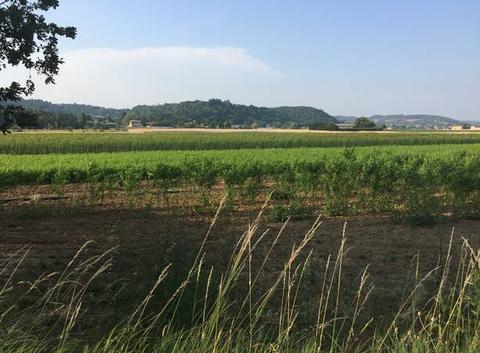Canicule sur les champs