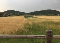 Ciel Mours-Saint-Eusebe 26540 Ciel d'orage sur les blés moursois ce soir
