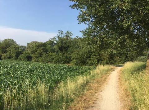 Sentier de campagne cette après-midi