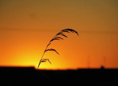 Une brindille au coucher de soleil