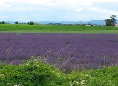 Faune/Flore Cleon-d'Andran 26450 Lavandes