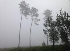 Brouillard Lue 40210 Forêt