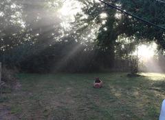 Ciel Bonnemaison 14260 ...après dissipation des brumes et brouillards matinaux...